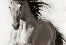 Horses / The mane flows like a river, the sound of their hooves, thunder, and their neigh, is lightning.