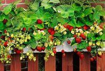 edible balcony garden