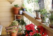Outdoor Oasis / Garden tips, inspiring curb appeal, and great backyards.