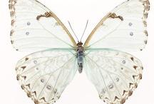 Papillons  / by Aimee Salmi