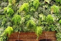 Nossas Paredes Verdes