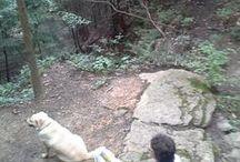 Hiking / Backpacking, walking, hiking