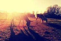 Funny Farm :)