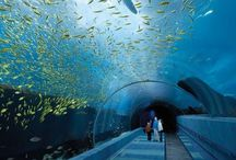 Aquariums around the world