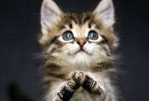 Here kitty, kitty! / by Kathryn N.
