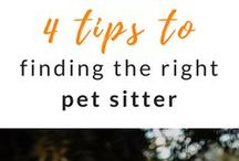 Dog Blog / Useful pins for your dog - handy guides and tips about dog training, DIY dog food recipes, dog advice, dog health info, and more. We have everything you need to know about your dog on the Tractive blog!