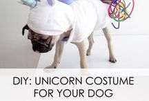 Pets and Unicorns / Unicorn and pet lover? You will love this special board of unicorns & dogs related topics. Everything about pets, especially dogs & unicorns in one board just for you