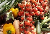 """TuoranGo! Mangia e Bevi / La Puglia è una capitale gastronomica! Se anche tu vuoi assaporare appieno le nostre tradizioni culinarie, visita le nostre offerte, scegli il tuo """"local"""" e preparati a vivere un esperienza gastronomica indimenticabile! Potrai mangiare a casa di una famiglia o in una trattoria tipica. Potrai visitare una cantina degustando vini e prodotti tipici oppure divertiti mangiando nelle nostre Sagre. . .  Cosa aspetti? Con TouranGo! lo puoi fare prima ancora di arrivare! www.tourango.it info@tourango.it"""