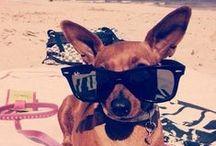 """Chic4Dog"" Best Friends / Photos & videos of #Chic4Dog's friends & customers | #dog #puppy | Foto e video di amici e clienti di Chic4Dog"