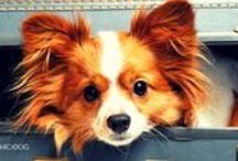"""""""Chic4Dog"""" Blog / #News dal nostro #blog per te e il tuo #cagnolino."""