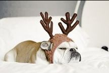 """Chic4Dog"" Christmas is coming! / #Christmas days are coming. How will be your Christmas with your 4 pawed friend?"