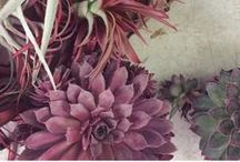 Marsala Mood / Let the Pantone Color of the Year guide your Wedding of the Year.  / by Camarillo Ranch