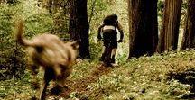 Trail Tales / Trail Biking Goodness