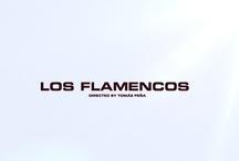 Los flamencos (The flamingos) / A shortfilm by Tomás Peña