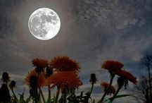 The moon / by Stephany Torrent