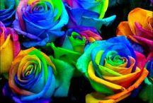 BARVA / Jednotlivé poznatky o barvě jako výtvarném prostředku ve výuce vv.