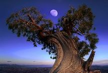 Beautiful Trees / The amazing beauty of trees