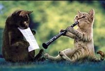 Pets / Pets playing musical instruments