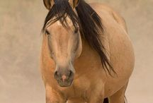 Relating to Miss Jane / Equine beauties... / by Denise Norris