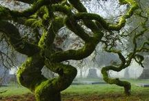 Perplexing Perennial Plants. ~Trees!~ :) / In botany, a tree is a perennial plant with an elongated stem, or trunk, supporting branches and leaves in most species.