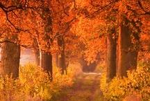 Bäume/trees