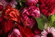 Flower arrangements / by TBC