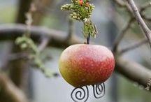 Garden- Kert