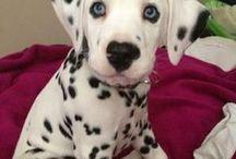 Cute doggies!!!