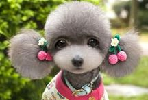 #doggy fashion