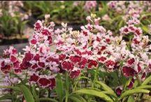 Ranyuen Flower / Beautiful flowers from Ranyuen Japan (http://ranyuen.com)