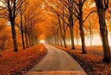 Autumn | Fall feeling