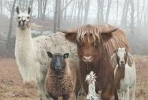 Barnyard Friends / by Leslie Veterinary Hospital