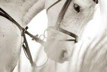Love: Horse