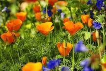 Cottage Garden / Inspiration for my dream garden