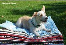 Mein Hund / Austattung, Nähideen und alles rund um und für den Hund in meinem Leben