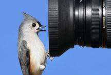 Birds / by Zatras