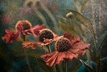 Bloom-y / Flowers lift the soul