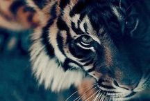 ** Animal Lover **