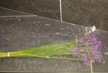 Lavendel / Lavendel  Liefde
