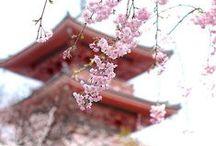 Japan :)