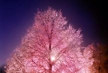 Tree =)