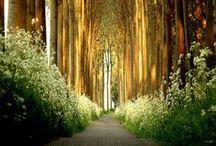 Path :))