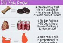 Did You Know? / Interesting facts about pets & pet care.