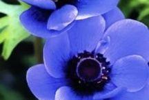 Flowers / flower