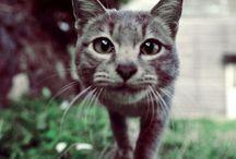 Feline friends & other animals