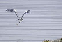 Birdwatching / Birds I've seen