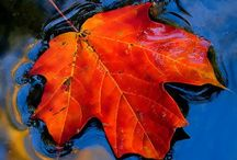 Season of mists & mellow fruitfulness / All things autumnal