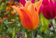 Garden ideas / by Peggy Fromey Nolan