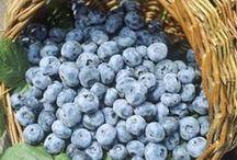 Blueberries - Blaubeeren - Heidelbeeren