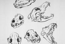 Animals - Skull